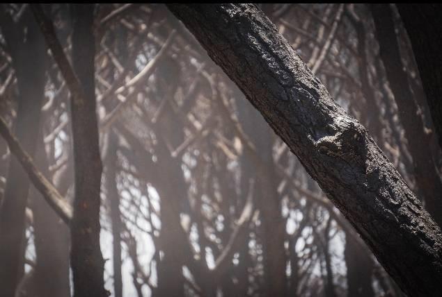 Incendi, arrestato piromane nel Valdiano