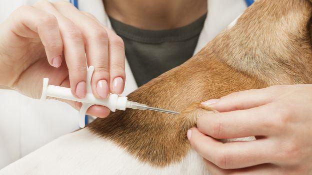 Il Consiglio Regionale approva la legge per tutelare gli animali da compagnia