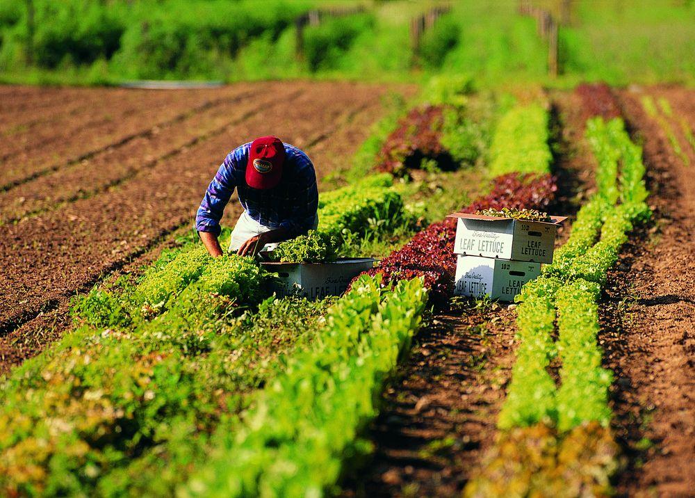 Revocato lo sciopero nazionale dei lavoratori agricoli