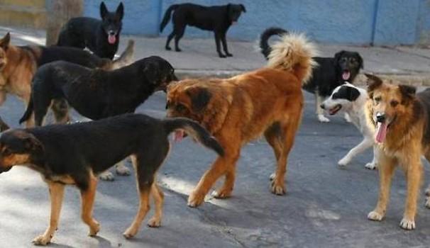 Adotta un cane e non paghi la TARI: l'iniziativa del comune di Ponte