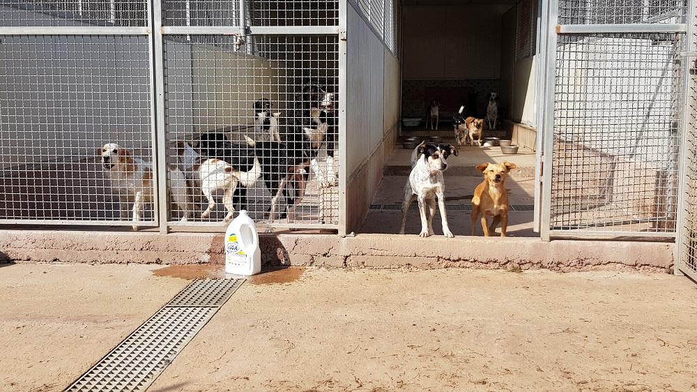 Donate 10 tonnellate di alimenti al canile di Cellole per fronteggiare l'emergenza