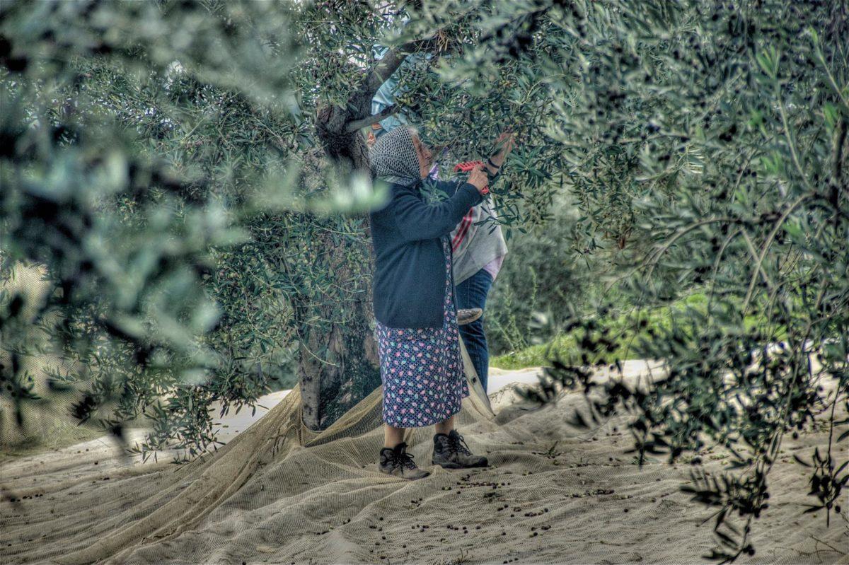 """Concorso Fotografico """"Immagini del Sannio Rurale"""": ecco i finalisti"""