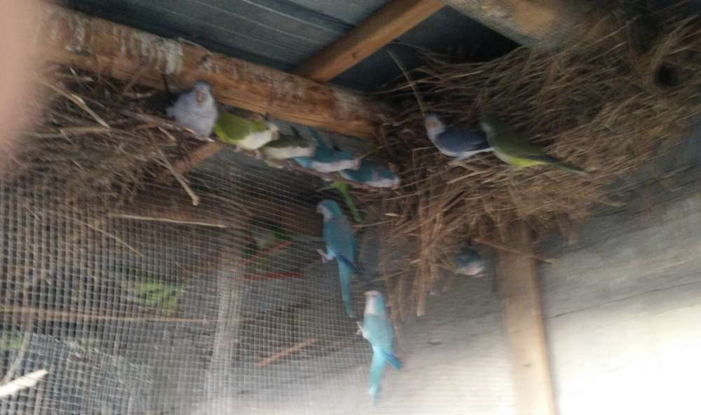 Salerno, i forestali sequestrano uccelli appartenenti a specie protette