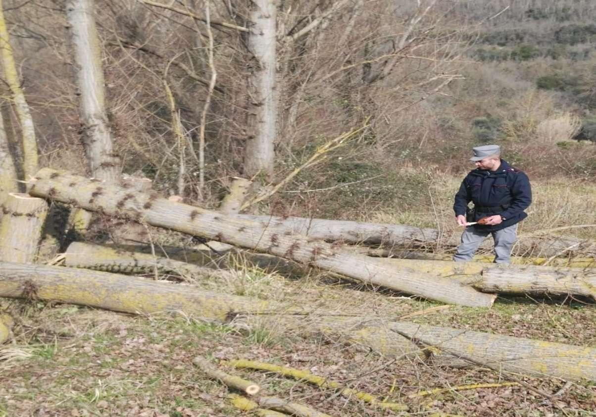 Romagnano al Monte: taglio alberi senza autorizzazione: denunciato l'autore