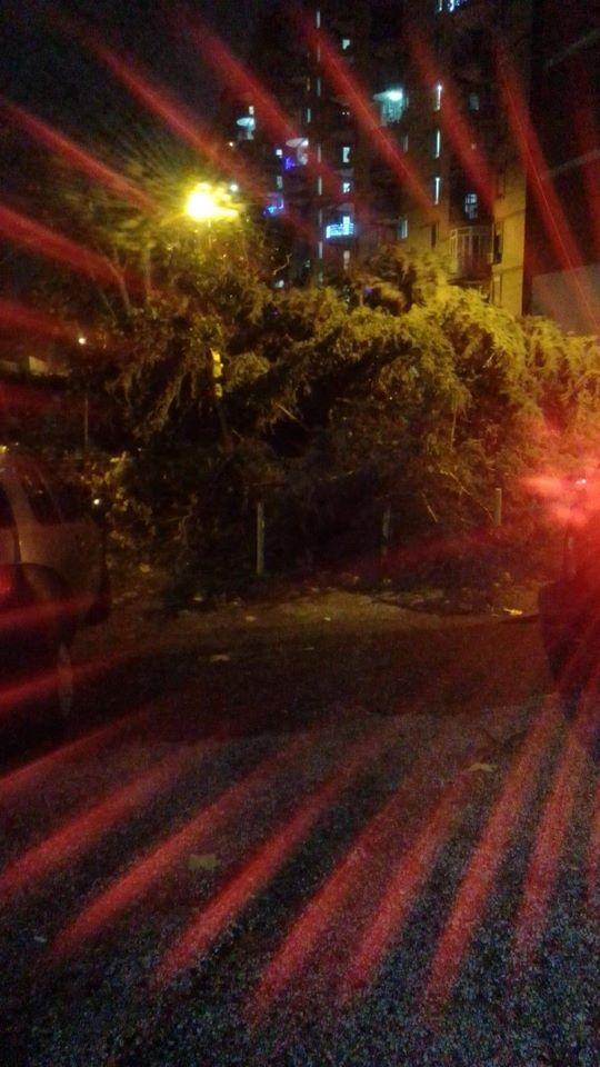 Maltempo, Napoli in ginocchio: crollano alberi, terrore allo
