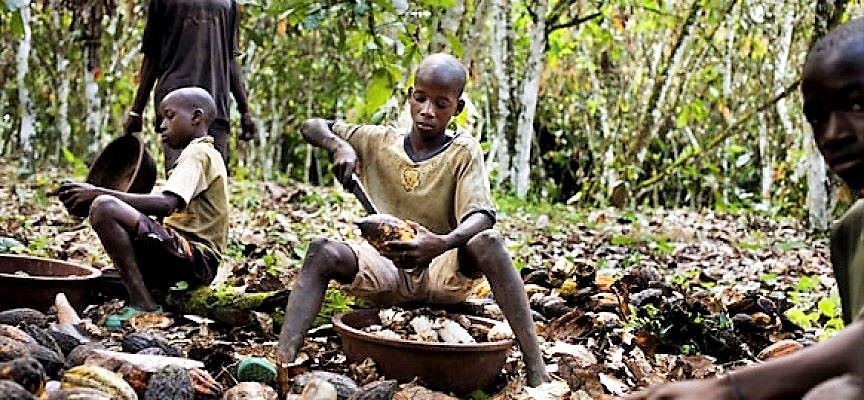 """Mallamaci, campo cacao in Africa: """"Altre 20 famiglie giù dai"""