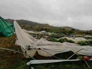 Allerta meteo nella Valle del Sele, aziende agricole e zootecniche danneggiatedal maltempo