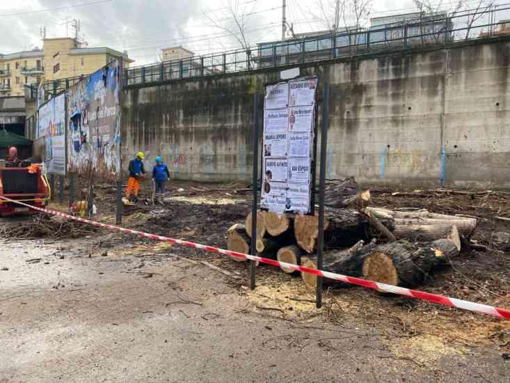 Via Vinciprova, il Comune di Salerno abbatte cinque alberi