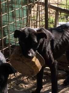 Maltrattamento animali, sequestrati 9 cani e denunciato l'autore